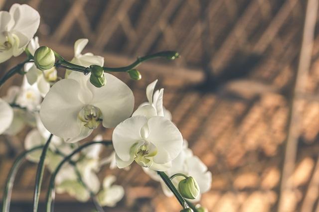 Kwiart storczyku