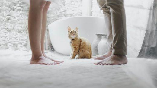 Dwoje ludzi i kot