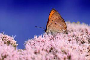 Ładny motyl